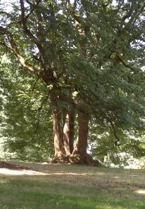 Tree at top of park.