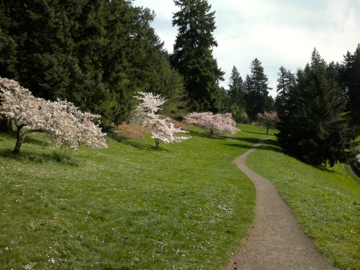 Cherry tree trail through park