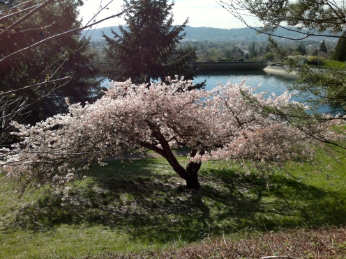 Cherry Tree view from Kart Track