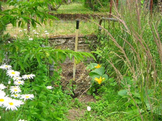 Compost Bed with Daisies and Pumpkin