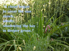 Joyce's Ulysses Green