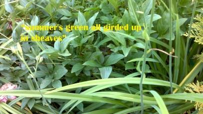 Shakespeare Green
