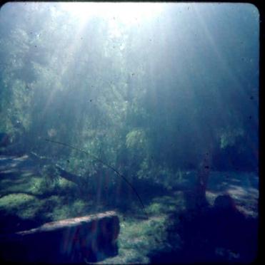 Sun in Camp