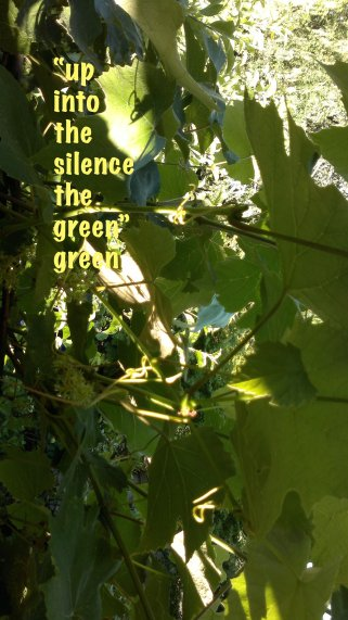 up into the silence the green green