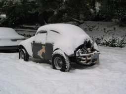 Bug in Snow