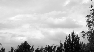 clouds above trees