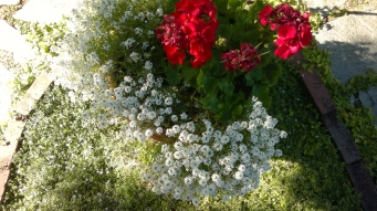White & Red Flowers