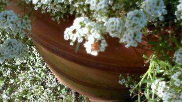 bee center on flower