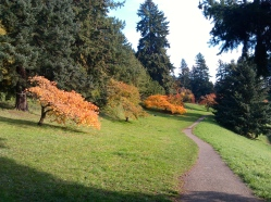 Cherry trees in fall, looking south on path above Reservoir # 5