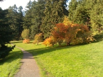 Cherry trees in Fall, looking north on path above Reservoir # 5